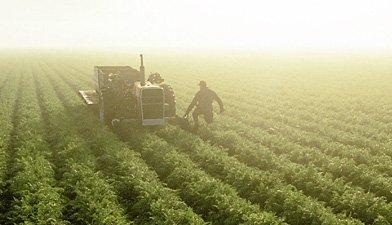 agribusiness development